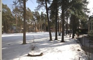 Meža proepskts - Attēls