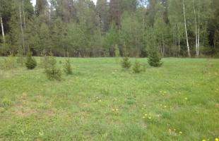 Mežsētas - Attēls 1