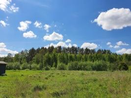 Mežs - Attēls 1