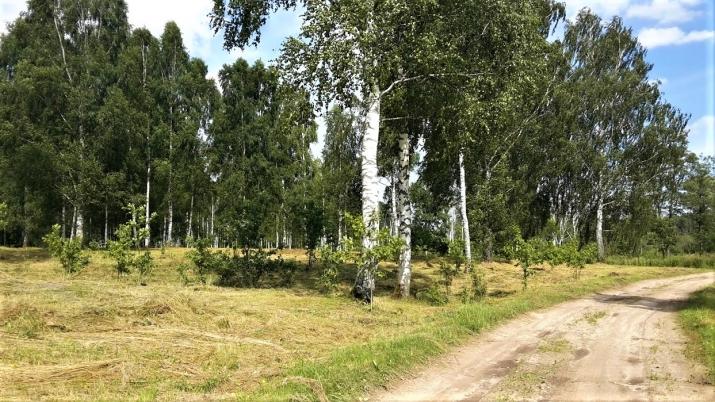 Объявление. Tiek pārdota 13ha (130000m2) plaša zeme ar mežu/grants kalnu (~60 000m3) - piemērots grants Цена: 55000 EUR Foto #3