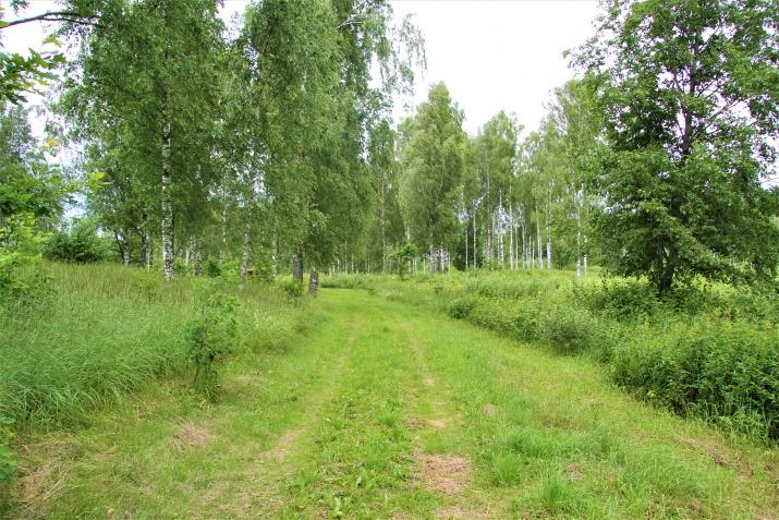 Объявление. Tiek pārdota 13ha (130000m2) plaša zeme ar mežu/grants kalnu (~60 000m3) - piemērots grants Цена: 55000 EUR Foto #2