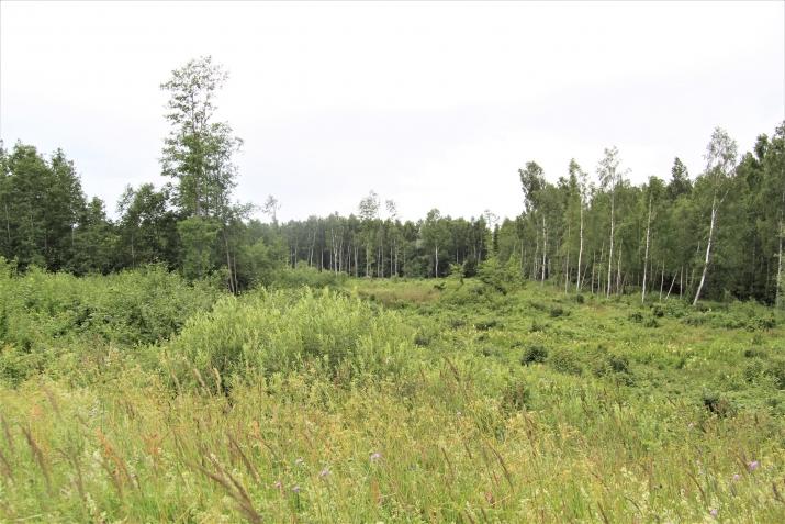 Объявление. Tiek pārdota 35ha (350000m2) zeme ar mežu, kura klāj kūdras lauku (400 000 m3). Ir izveidots Цена: 105000 EUR Foto #1