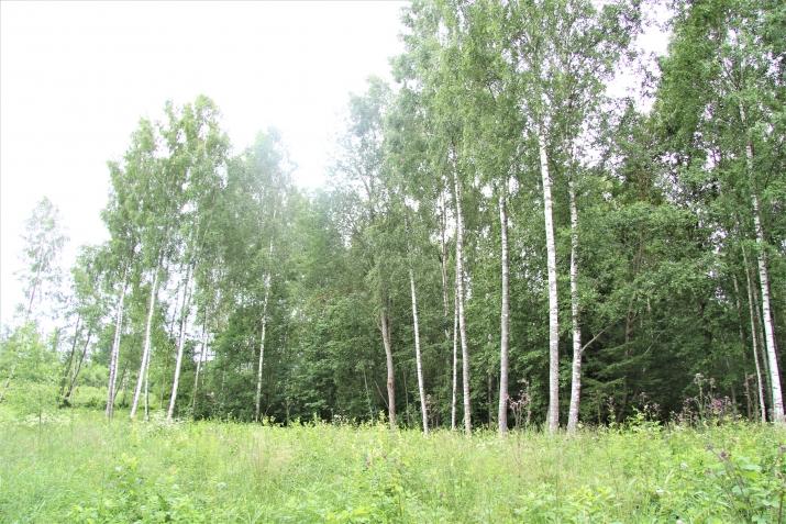 Объявление. Tiek pārdota 35ha (350000m2) zeme ar mežu, kura klāj kūdras lauku (400 000 m3). Ir izveidots Цена: 105000 EUR Foto #2