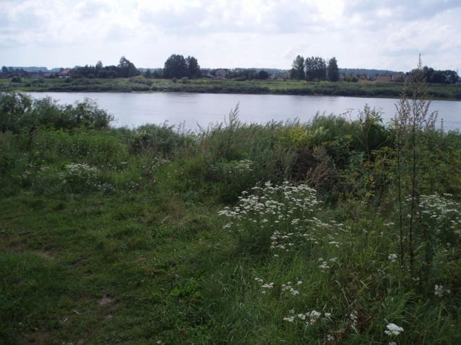 Sludinājumi. Pārdod zemes gabalu 2.28 ha platībā Daugavas krastā. Saskaņā ar attīstības plānu zemes gabals Cena: 25000 EUR Foto #5