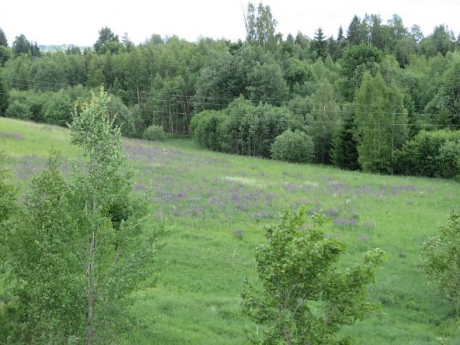 Sludinājumi. Pārdod vēsturisku lauku īpašumu Silakrogs Vecpiebalgas novadā, netālu no Alauksta ezera. Īpašumā Cena: 95000 EUR Foto #4